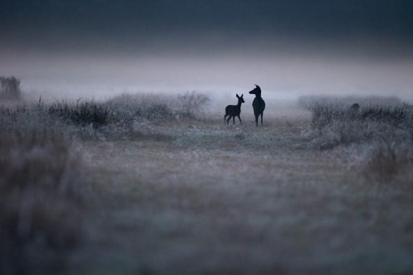 David Potron - Les ombres de l'aube